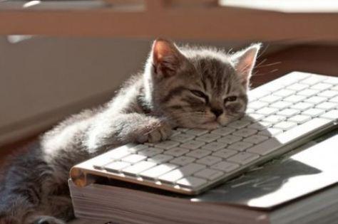 writingcat1