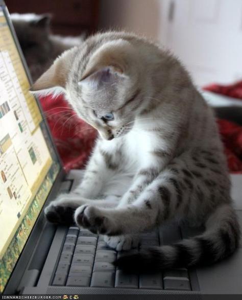 writingcat2