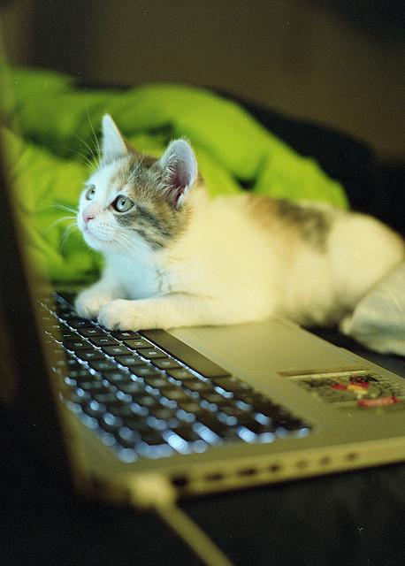 writingcat3