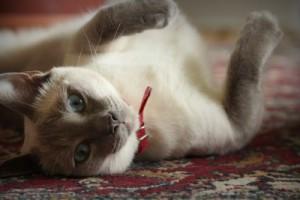 cat-948838_1280